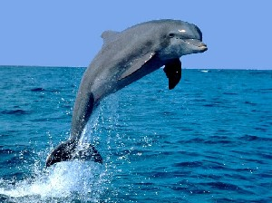 Rate Dolphin